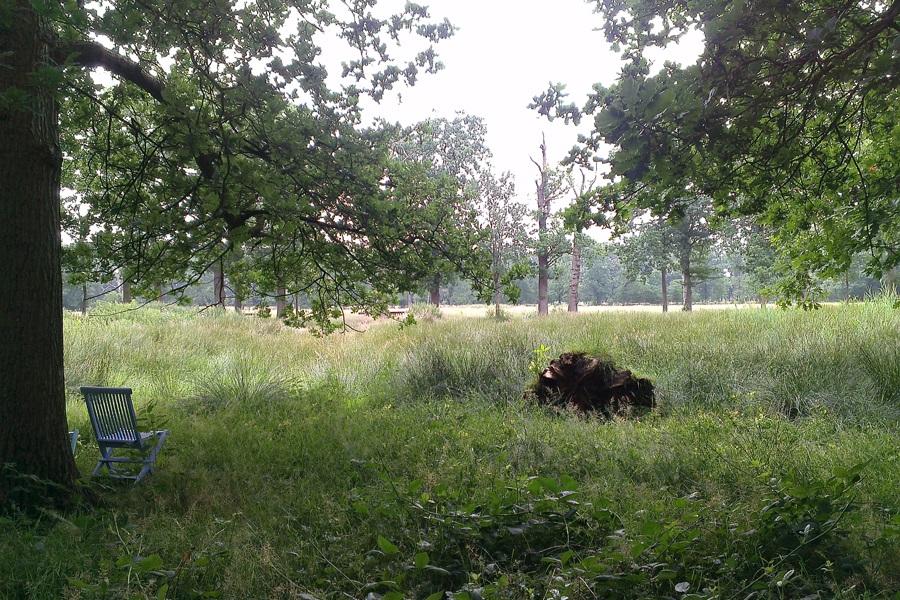 Teile des Kunstfestivals Into Nature sind wortwörtluich mitten im Grünen
