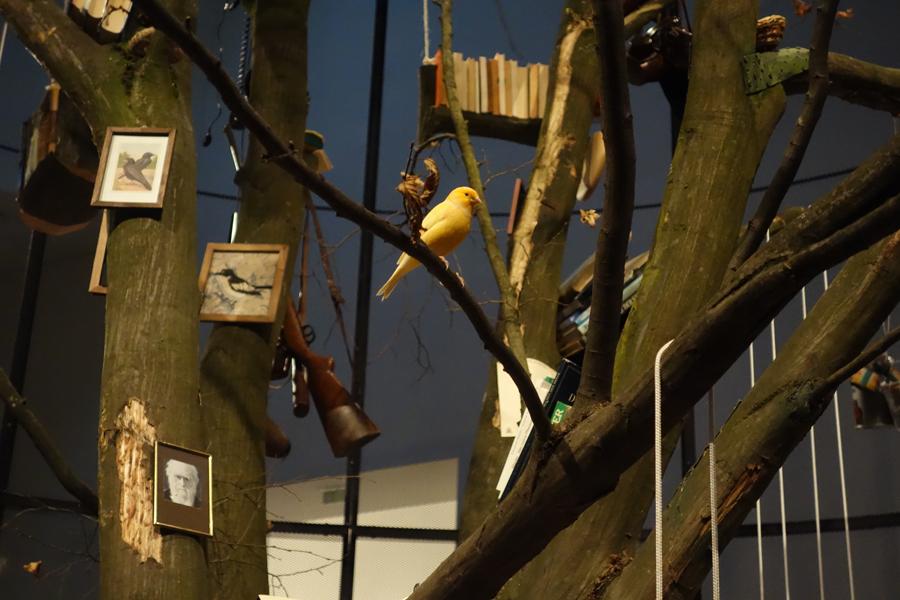 """Ein einzelner Vogel auf einem Ast inmitten von Details der Installation """"Library for the Birds"""""""