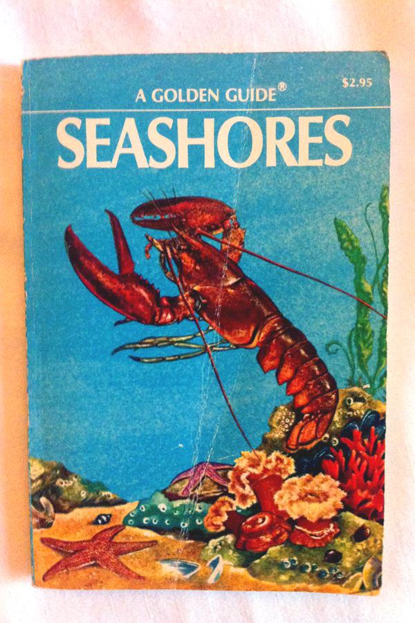 """Abbildung Buchcover """"A golden Guide - Seashores"""""""