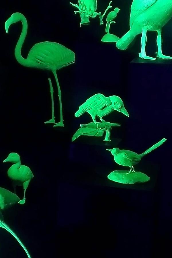 Ein für Into Nature neu entstandenes Werk Mark Dions: Eine Installation mit phosphorisierenden Vögeln